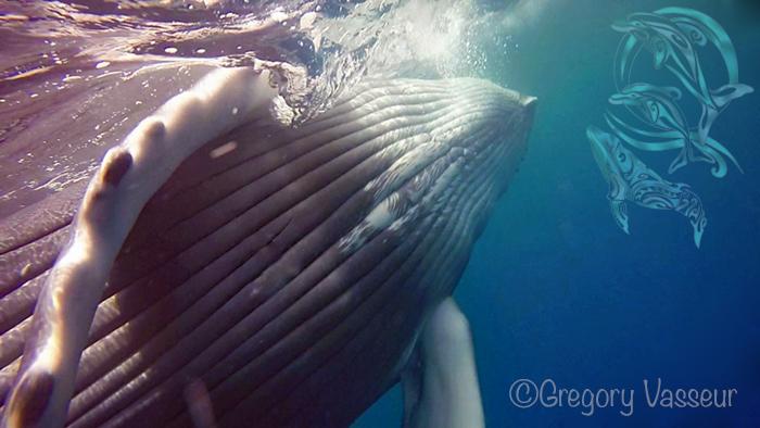 whales moorea - ©G.Vasseur