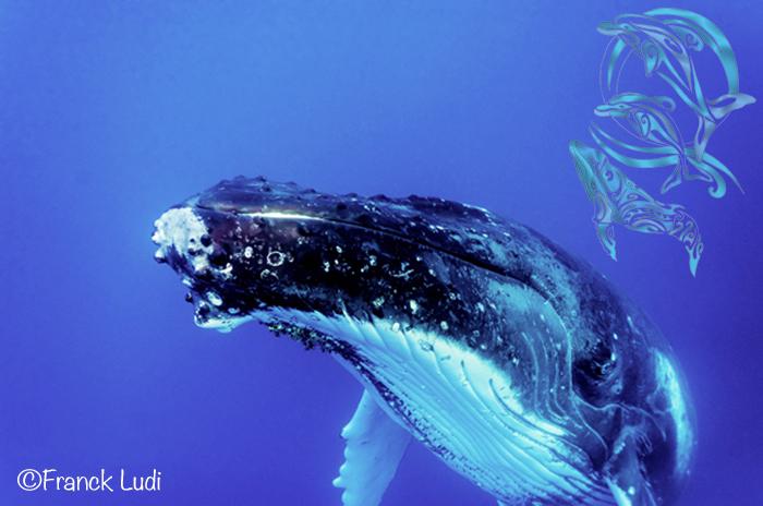whales moorea