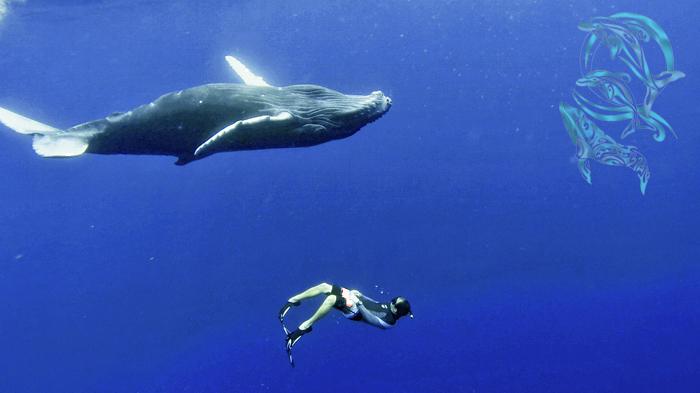 whales moorea and Heifara