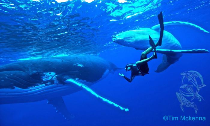 whales moorea and Heifara - ©Tim Mckenna