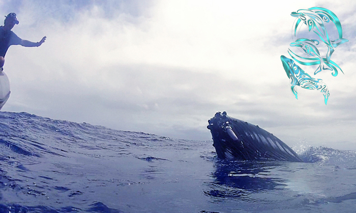 "whales moorea - Heifara and ""golden eyes"""