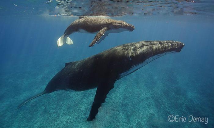 Baleine de may 18 2