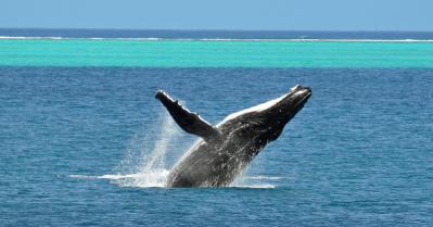 Baleine13 2