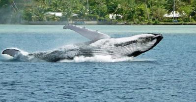 Baleine14 2 2