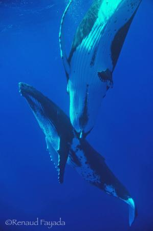 Baleine15 1 3 2