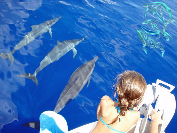 spinner dolphins moorea
